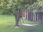 Łoś w Szwecji
