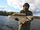 Ryba złowiona w Szwecji