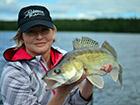 Ryba Sandacz złowiona w Szwecji