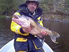 Ryba  sandacz złowiony w Szwecji