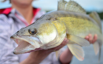 Ryby w Szwecji