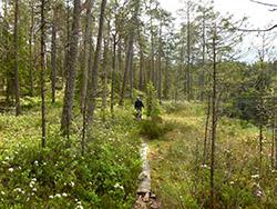 Park narodowy w Szwecji