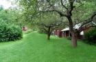 Ogród i drzewa w Szwecji